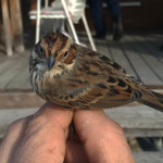 zabiljezena-261-vrsta-ptice-u-parku-prirode-vransko-jezero-02