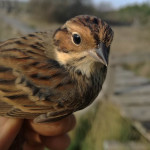 zabiljezena-261-vrsta-ptice-u-parku-prirode-vransko-jezero-03