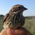 zabiljezena-261-vrsta-ptice-u-parku-prirode-vransko-jezero-04