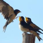 birdwatcher-04