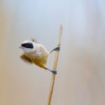 birdwatcher-07
