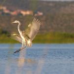 birdwatcher-08