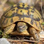 medunarodni-dan-bioraznolikosti-i-dan-zastite-prirode-03