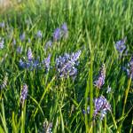 medunarodni-dan-bioraznolikosti-i-dan-zastite-prirode-04