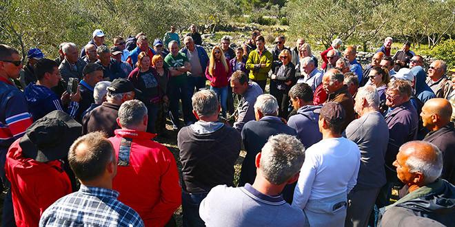 Održana radionica cijepljenja i rezidbe maslina u Parku prirode Vransko jezero