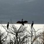 odrzani-prvi-treninzi-prepoznavanja-ptica-03