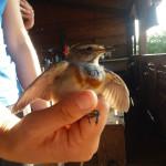 odrzani-treninzi-promatranja-ptica-mali-prstenovacki-kamp-te-izrada-kucica-za-ptice-11