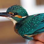 ornitoloski-kamp-u-parku-prirode-vransko-jezero-upoznajte-ptice-izbliza