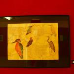 postavljena-izlozba-u-muzeju-grada-zadra-10