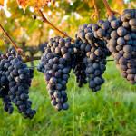 predavanja-za-vinogradare-i-vinare-01