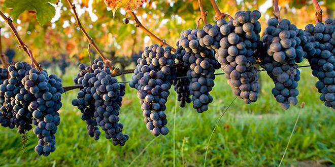 Predavanja za vinogradare i vinare