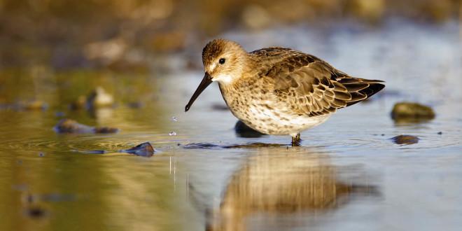 Pridružite se Treningu prepoznavanja ptica