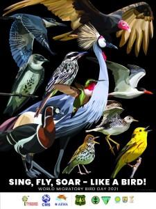 proslava-svjetskog-dana-ptica-selica-u-parku-prirode-vransko-jezero-plakat