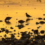 proslavimo-svjetski-dan-vlaznih-stanista-uz-premijeru-filma-o-pticama-vranskog-jezera-01