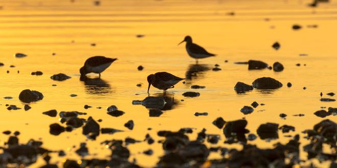 Proslavimo Svjetski dan vlažnih staništa uz premijeru filma o pticama Vranskog jezera!