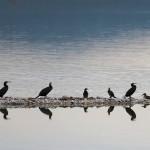 proslavimo-svjetski-dan-vlaznih-stanista-uz-premijeru-filma-o-pticama-vranskog-jezera-03