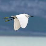 proslavimo-svjetski-dan-vlaznih-stanista-uz-premijeru-filma-o-pticama-vranskog-jezera-05