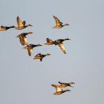 proslavimo-svjetski-dan-vlaznih-stanista-uz-premijeru-filma-o-pticama-vranskog-jezera-11