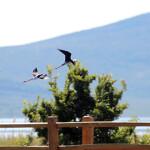 proslavite-s-nama-dan-parka-i-europski-dan-promatranja-ptica