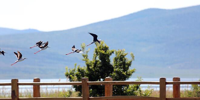 Proslavite s nama Dan Parka i Europski dan promatranja ptica!