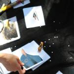 proveden-edukativni-program-na-temu-ptica-24