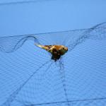 prstenovacki-kamp-pracenje-jesenske-migracije-ptica-03