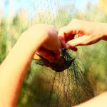 prstenovacki-kamp-pracenje-jesenske-migracije-ptica-05