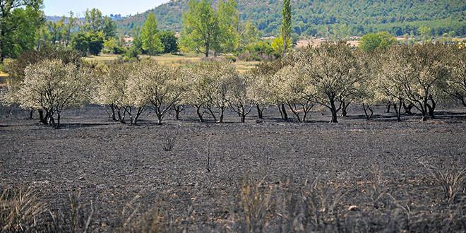 Sanacije štete od požara na višegodišnjim nasadima