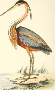 selice-vranskog-jezera-caplja-danguba
