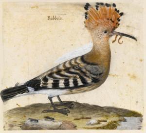 selice-vranskog-jezera-pupavac