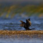 trening-prepoznavanja-ptica-02