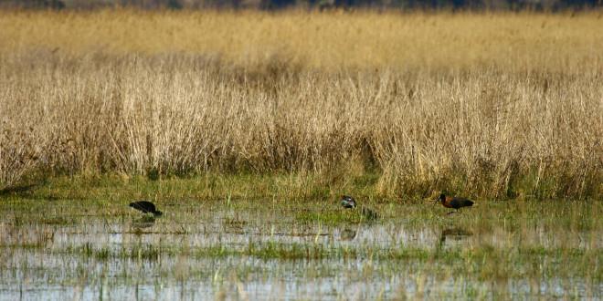 Udruga Biom i Park prirode Vransko jezero zajedno u očuvanju vlažnih livada