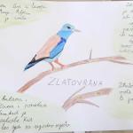 ususret-proljetnim-migracijama-online-izlaganje-ucenickih-radova-04