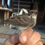 zabiljezena-261-vrsta-ptice-u-parku-prirode-vransko-jezero-01